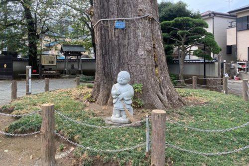 泉福寺 イチョウ 地蔵