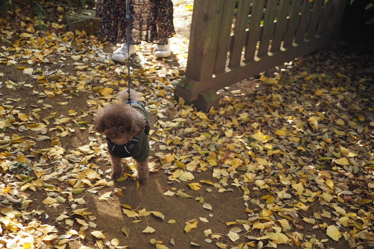 等々力不動尊と犬